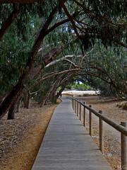 Under the trees (Maribeljukebox) Tags: paisaje landscape nature naturaleza parquenatural lamata torrevieja trees
