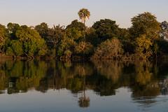 20160826_ZambeziReflections_MCM-6 (mcmessner) Tags: africa bjadventures blue livingston reflection river rorschak southafrica2016 sunrise sunriseboatride tongabezilodge zambeziriver zambia livinstone