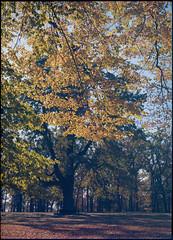 """Uman, Ukraine, Garden """"Sofiyivka"""" in 2016 .. Fuji GX680  Porta 100... (mediaoleg) Tags: uman ukraine gardensofiyivkain2016fujigx680porta100"""