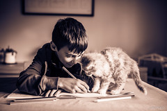 Le chat et l'enfant (1) : Complicit (LACPIXEL) Tags: enfant child nino boy garon chico chaton kitten gatito pet animal mascota intrieur inside lumirenaturelle naturallight luznatural monochrome sigma nikon nikonfrance nikonfr d4s fx flickr lacpixel