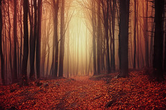 Autumn Wonder I. (Zsolt Zsigmond) Tags: forest trees woods autumn fall fog mist leaves foliage light morning dawn nature landscape flickr nikon d5100 sigma colours hungary path way trail walk outdoor