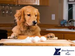 El huevo para los perros los perros CLINICA VETERINARIA DEL BOSQUE 2 (tipsparamascotas) Tags: veterinariadelbosqueveterinariacuidadodemascotasmascotassaludablesesteticacaninaclinicaveterinariadelbosqueespecialistasencuidadodemascotaswwwveterinariadelbosquecomveterinariadelbosque veterinaria cuidadodemascotas mascotas mascotassaludables estticacanina delbosque
