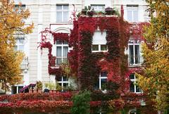 Flowerhouse (elmar theurer) Tags: house flower wilder wein oktober indian summer autumn fassade karlsruhe