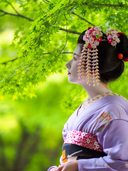 Maiko20161017_03_03 (kyoto flower) Tags: tanan fukuno kyoto maiko 20161017     gaap
