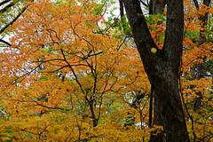 (ansel.ma) Tags:   laketowada  northeasternjapan aomori fujifilmxt1 fujifilmxf55200mmf3548ois
