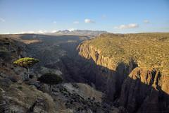 Cracked Earth (indomitablemachine) Tags: dixam rokeb canyon dragonblood firmhin hut plateau socotra yemen hadhramautgovernorate ye