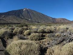 Las Cañadas del Teide (rvr) Tags: cañadas teide tenerife canaryislands