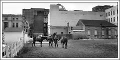 Newark Mounted Police (2004) (Ebanator) Tags: downtownnewark newarknj newark nikoncoolpix995 newjersey newarkpd newarkpolice mountedpolice horses newarknewjersey