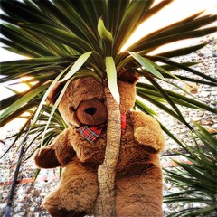 Escapee (Caroline Oades) Tags: charity england westsussex toy bowtie architecturalplant leaves tree yucca freedom ontherun escaped escapee chichester teddy bear
