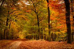 the ultimate fall colors (www.petje-fotografie.nl) Tags: bomen gelderland gelderslandschap blaadjes bolchrysant bruin geel groen herfst kleurlucht rood
