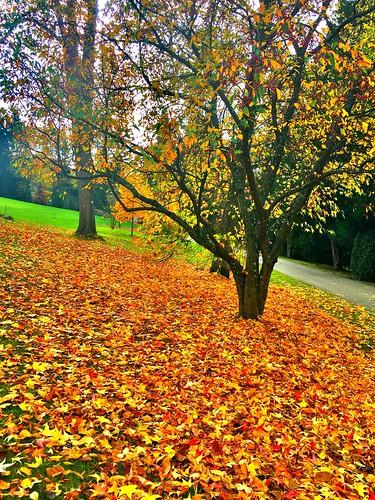 Autumn's falling ...