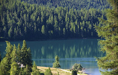 take an emerald plunge - HGGT! (lunaryuna) Tags: stmoritzlake alps switzerland engadin graubnden stmoritz trees lake reflections summer season nature landscape lunaryuna gorgeousgreenthursday
