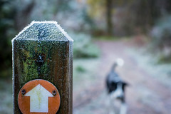 Zac never stops wagging his tail! (grahamrobb888) Tags: nikon nikond800 nikkor50mmf18 nikkor birnamwood forest frost cold perthshire scotland bokeh
