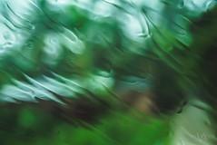 Driving In The Rain (Vivek R. Singh: Visual Artist) Tags: india blur green window glass car rain driving moody dof bokeh depthoffield raindrops greenery lush assam northeast tezpur vivekrajsingh vivekrsingh vivekrsinghvisualartist