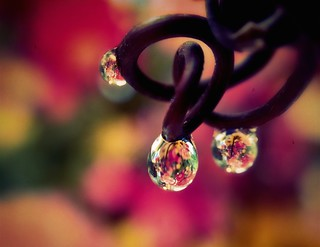 Flower filled terrarium