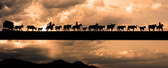 Last Round Up (magnetic_red) Tags: sunset sky horses mountains silhouette cowboys clouds cattle dramatic horns stormy longhorns western ropes mules americanwest wagons cattledrive