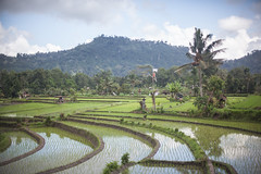 Arrozales de Sidemen (Sitoo) Tags: rural rice terraces ricefields arroz terrazas sideman arrozales riceyard