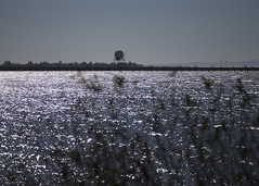 Iona's Silver Sea_2976 (Mike Head -Jetwashphotos) Tags: autumn canada fall bay warm bc pacific britishcolumbia richmond iona westwind westerncanada georgiastrait ionapark jwp silversea glistens westernregion
