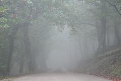 L'automne est l!!!! Notre Dame des Anges le 03.10.2015. (guilsurf83) Tags: orange rain fog automne three pluie arbres campagne froid brouillard bois brume notredamedesanges