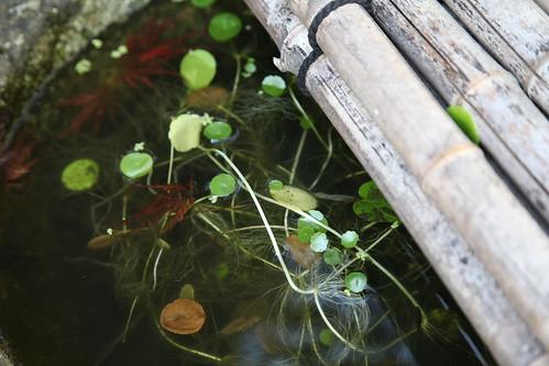 甕のなかの水草