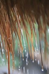 Bacuit islands hopping (www.JnyAroundTheWorld.com - Pictures & Travels) Tags: texture rain canon islands philippines pilipinas elnido islandhopping palawan miniloc bacuitarchipelago bacuitislands