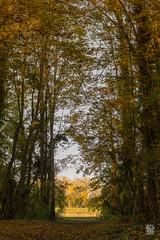 2015-11-01_Q8B3982  Sylvain Collet.jpg (sylvain.collet) Tags: autumn france nature automne sur marne vairessurmarne vaires