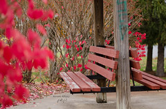 Calmness... (Amani Alhjaji) Tags: autumn red fall colors leaves nikon                d7000