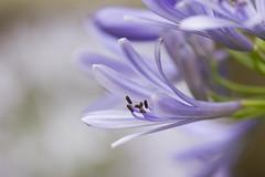 (alinesouzafotografia) Tags: macro flor vida aline souza detalhe lilas fotgrafa senac petalas alinesouza