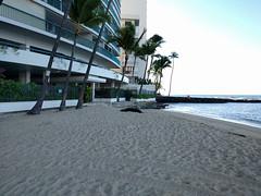 2015HawaiiPhone (82 of 82) (bikeandsail) Tags: hawaii oahu monkseal 2015 uncruise otanikaimanabeachhotel