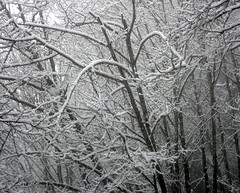 Snow (Dru!) Tags: