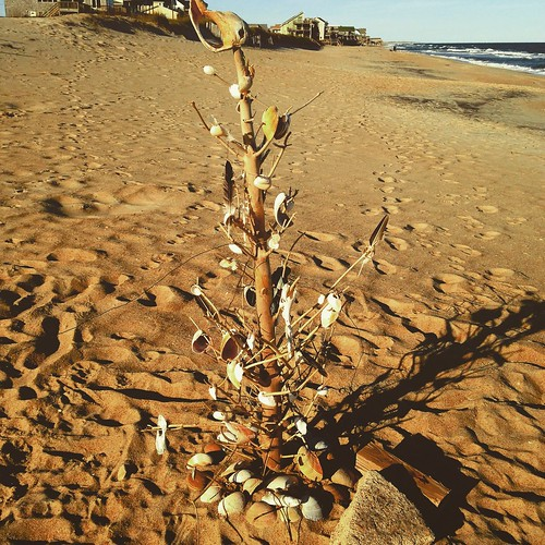 Seashell holiday tree on the beach