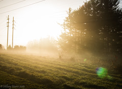 IMG_1929 (hillarycharris) Tags: morning trees mist nature fog sunrise canon landscape outdoors foggy tamron morningmist naturephotography morningfog mistymorning treesinfog foggytrees foggylandscape sunrisephotography treesinmist mistylandscape canonrebelt5 canoneost5