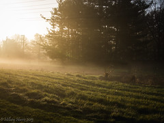 IMG_1930 (hillarycharris) Tags: morning trees mist nature fog sunrise canon landscape outdoors foggy tamron morningmist naturephotography morningfog mistymorning treesinfog foggytrees foggylandscape sunrisephotography treesinmist mistylandscape canonrebelt5 canoneost5