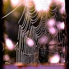 Happy Halloween! (violetchicken977) Tags: halloween cobweb spider spooky