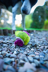 they don't make 'em like they used to! (grahamrobb888) Tags: nikond800 sigma20mmf18 birnam tighnabeithe perthshire scotland autumn garden zac ball destroyed gravel pathway bokeh