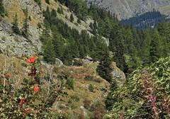 Bourg St-Pierre (bulbocode909) Tags: valais suisse bourgstpierre valdentremont montagnes nature chalets forts arbres paysages vert rouge