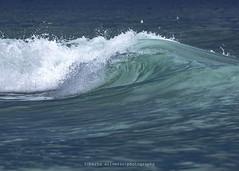 P145976Roberto Silverio (Roberto Silverio) Tags: surf surfer surfing swell waves varazze liguria loveliguria italy watersport olympuscamera olympusphotography sport colors colori zuikolens zuikodigital pic photo photography photooftheday vzz ondenostre liquid