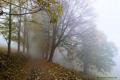 Autunno al Canal Secco d'Oropa (Ferruccio Zanone) Tags: autunno foglie alberi oropa sentieri