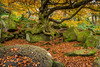 Back to the Grind Stone. (Ian Emerson) Tags: stone grind autumnal autumn colourful moss rocks tree roots leaves orange green outdoor october canon 1855mm lightroom peakdistrict
