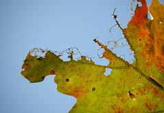 (amy20079) Tags: nikond5100 newengland maine fall autumn