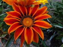 (MonseValentina) Tags: colors flor flower green black orange red amazing beautiful cute natural nature naturaleza primavera small