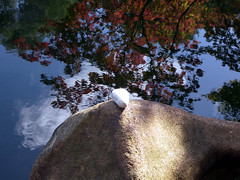 100_5218ps Spiegelung reflection (Wallus2010) Tags: wasser spiegelung stone germany reflection ruhe frieden meditation entspannung