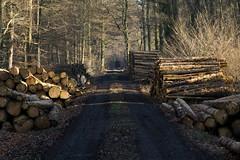 ckuchem-7065 (christine_kuchem) Tags: abholzung baum baumstmme bume einschlag fichten holzeinschlag holzwirtschaft wald waldwirtschaft