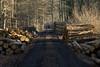 ckuchem-7065 (christine_kuchem) Tags: abholzung baum baumstämme bäume einschlag fichten holzeinschlag holzwirtschaft wald waldwirtschaft