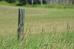 Lonely Post (Vegan Butterfly) Tags: fence post wood wooden grass summer outside outdoor ontario canada