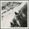 Archiv H883 Alpendohlen bzw. Bergdohlen, Zugspitze, 1949 (Hans-Michael Tappen) Tags: archivhansmichaeltappen alpendohlen bergdohlen zugspitze 1949 singvogelart rabenvogel hochgebirge alpen 1940er 1940s