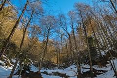 DSC_0065 (Noshen.M) Tags: jungle forest snow