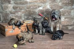 Familia Gosleydan (silversaltphoto) Tags: javiersenosiain silversaltphoto senosiain studio perro d800 nikon navarra mascotas pets dog gosdatura