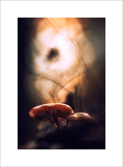 once upon a time   III (Zino2009 (bob van den berg)) Tags: fall autumn herbst color detail focus light warm gold mood hat forest wald sunlight dark misterious fairytale small mushroom paddestoel dutch holland nederland netherlands bos deventer zino2009 bobvandenberg