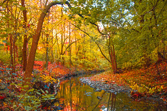 Fall colours with a bend and curve (A Great Capture) Tags: agreatcapture agc wwwagreatcapturecom adjm toronto on ontario canada canadian photographer northamerica ash2276 ashleylduffus ald mobilejay jamesmitchell fall autumn automne herbst 2016 colours colors light sun sunny sunshine scenery scenic waterscape water agua eau reflection outdoor outdoors vibrant colorful cheerful vivid bright woods leaves leaf foliage autumnleaves stone stones rock rocks tree trees red yellow green otoño